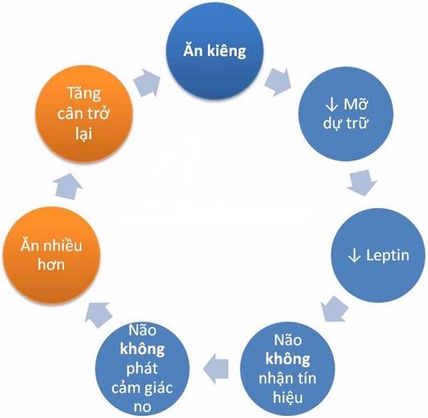 hiệu ứng yoyo giảm cân
