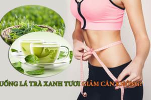 Uống lá trà xanh tươi có giảm cân không? Công dụng làm đẹp bất ngờ từ nước trà xanh