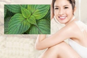 Uống nước lá tía tô có giảm cân không? Cách giảm cân bằng lá tía tô hiệu quả nhất