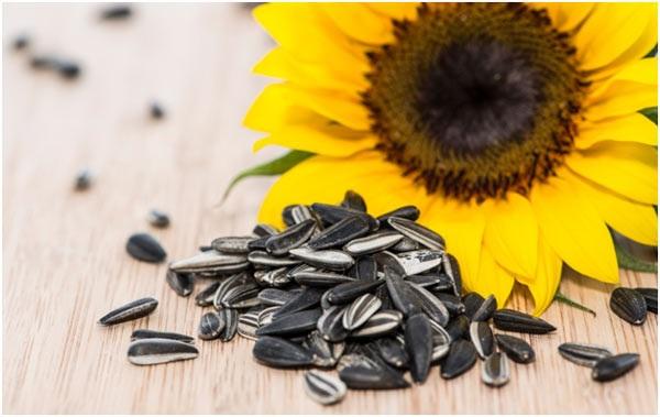 Hạt hướng dương | nhóm các loại hạt giảm cân giàu axit béo