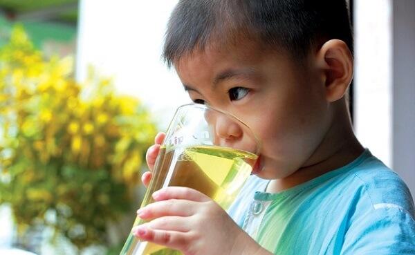 uống nước lá đinh lăng có giảm cân không, giảm cân bằng lá đinh lăng, lá đinh lăng giảm cân, uống nhiều nước lá đinh lăng có tốt không, uống nước lá đinh lăng có tác dụng gì, công dụng lá đinh lăng phơi khô, có nên uống lá đinh lăng thường xuyên
