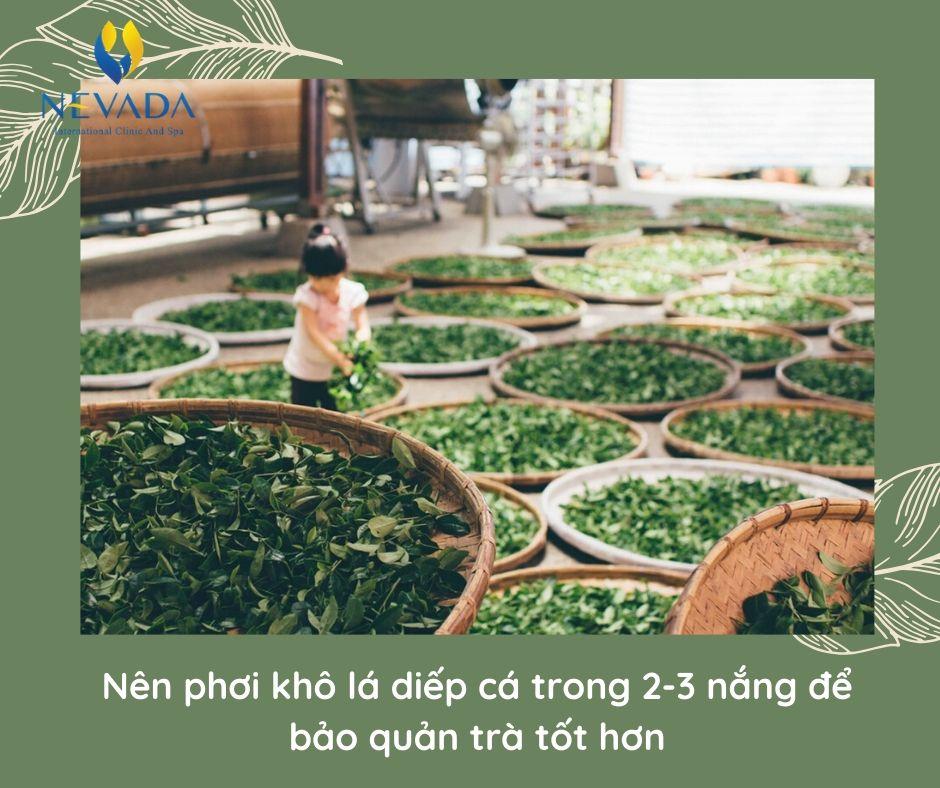 trà diếp cá giảm cân, trà giảm cân diếp cá nhật, trà diếp cá nhật bản có giảm cân không, uống trà diếp cá có giảm cân không, trà giảm cân rau diếp cá